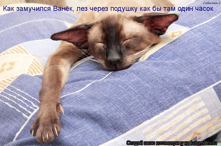 Котоматрица: Как замучился Ванёк, лез через подушку как бы там один часок