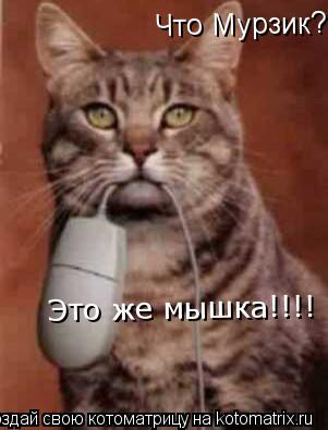 Котоматрица: Что Мурзик? Это же мышка!!!!  Это же мышка!!!!