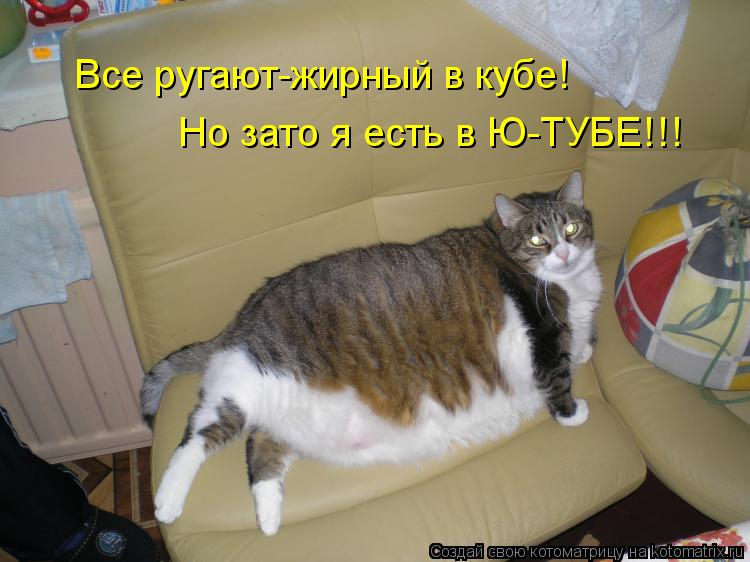 Котоматрица: Все ругают-жирный в кубе! Но зато я есть в Ю-ТУБЕ!!!