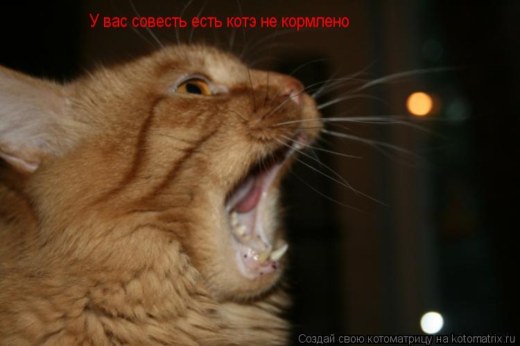 Котоматрица: У вас совесть есть котэ не кормлено