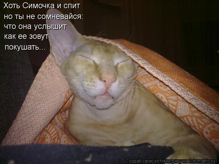 Котоматрица: Хоть Симочка и спит но ты не сомневайся: что она услышит  как ее зовут  покушать...