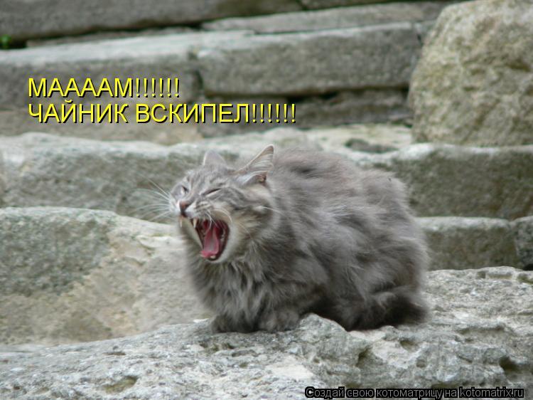 Котоматрица: ЧАЙНИК ВСКИПЕЛ!!!!!! МААААМ!!!!!!