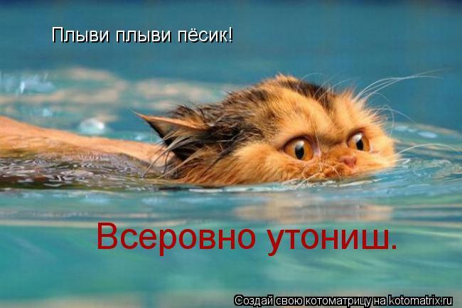 Котоматрица: Плыви плыви пёсик! Всеровно утониш.
