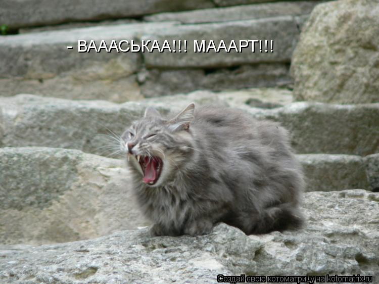Котоматрица: - ВАААСЬКАА!!! МАААРТ!!!