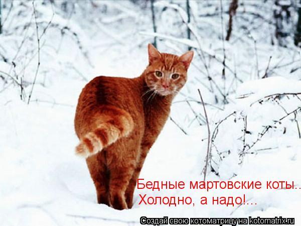 Котоматрица: Бедные мартовские коты... Холодно, а надо!...
