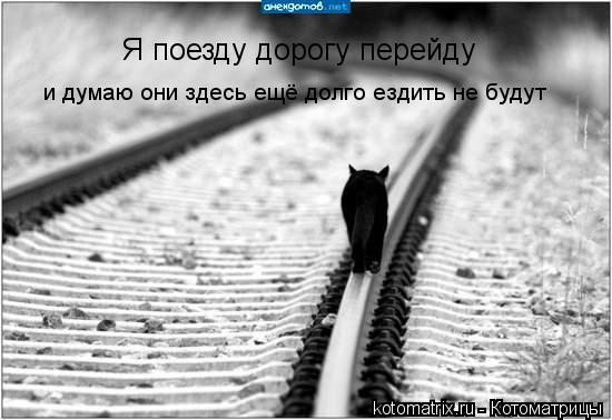 Котоматрица: Я поезду дорогу перейду и думаю они здесь ещё долго ездить не будут