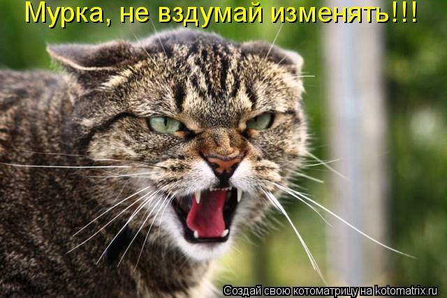 Котоматрица: Мурка, не вздумай изменять!!!