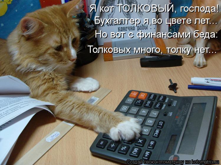Котоматрица: Я кот ТОЛКОВЫЙ, господа! Бухгалтер я,во цвете лет... Но вот с финансами беда: Толковых много, толку нет...