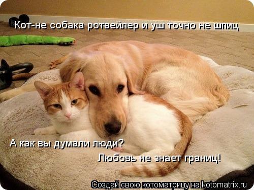 Котоматрица: Кот-не собака ротвейлер и уш точно не шпиц А как вы думали люди? Любовь не знает границ!