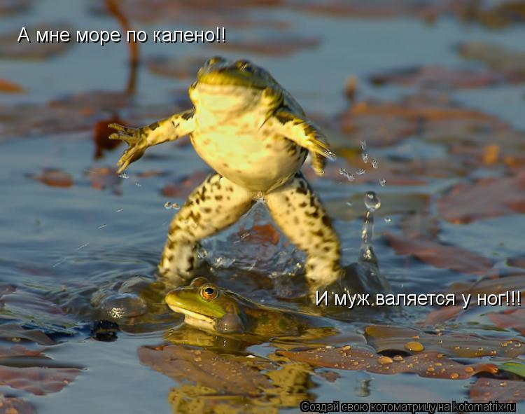 Котоматрица: А мне море по калено!! И муж валяется у ног!!!