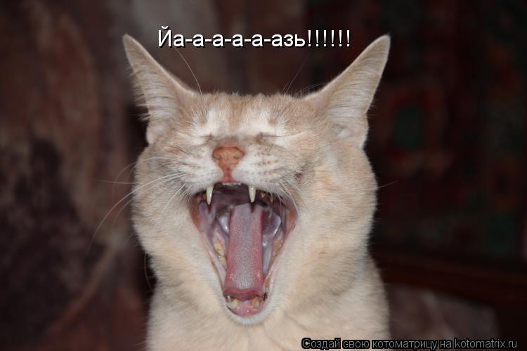 Котоматрица: Йа-а-а-а-а-азь!!!!!!
