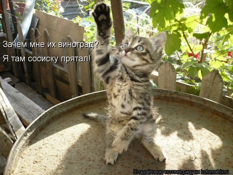 Котоматрица: Я там сосиску прятал! Зачем мне их виноград?