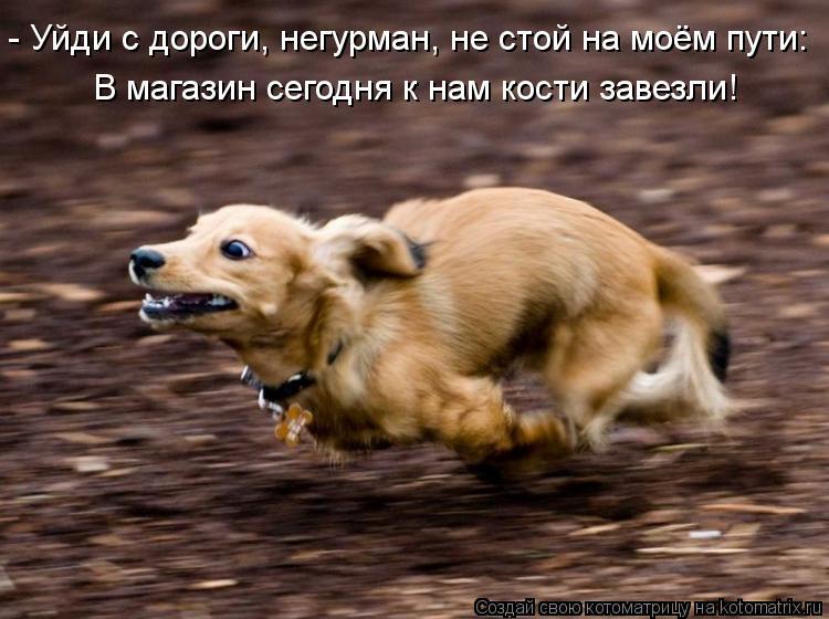 Котоматрица: - Уйди с дороги, негурман, не стой на моём пути: В магазин сегодня к нам кости завезли!