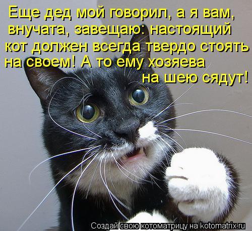Котоматрица: Еще дед мой говорил, а я вам, внучата, завещаю: настоящий  кот должен всегда твердо стоять на своем! А то ему хозяева  на шею сядут!