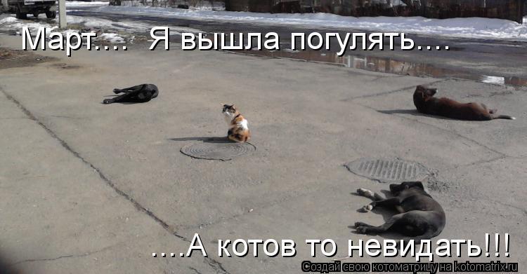 Котоматрица: Март....  Я вышла погулять.... ....А котов то невидать!!!
