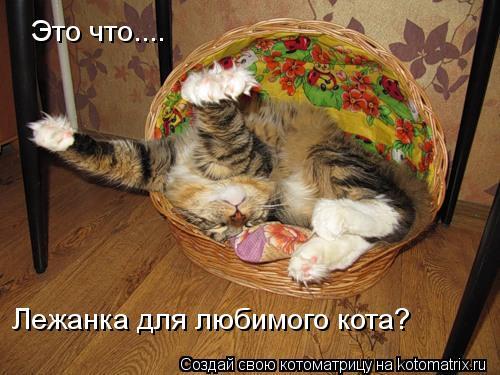 Котоматрица: Это что.... Лежанка для любимого кота?