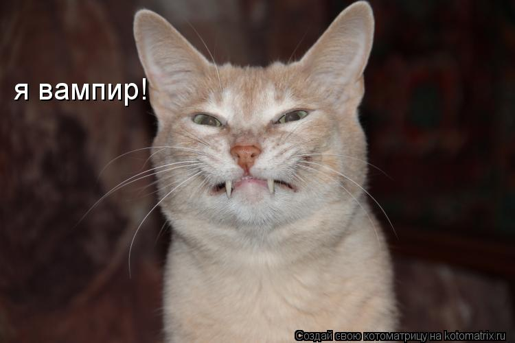 Котоматрица: я вампир!