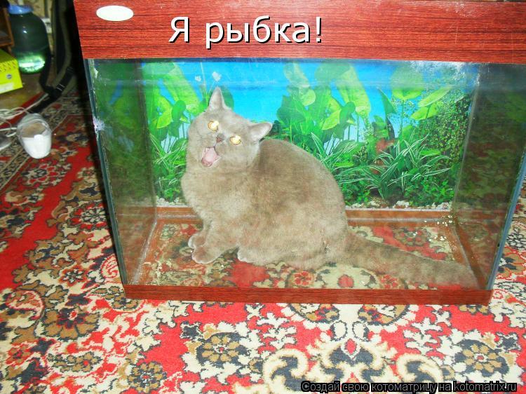 Котоматрица: Я рыбка!