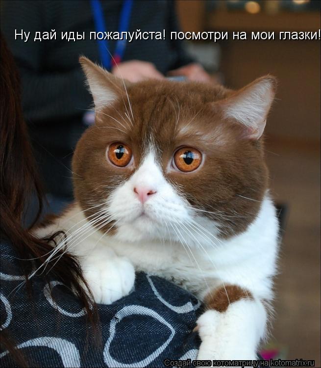 Котоматрица: Ну дай иды пожалуйста! посмотри на мои глазки!