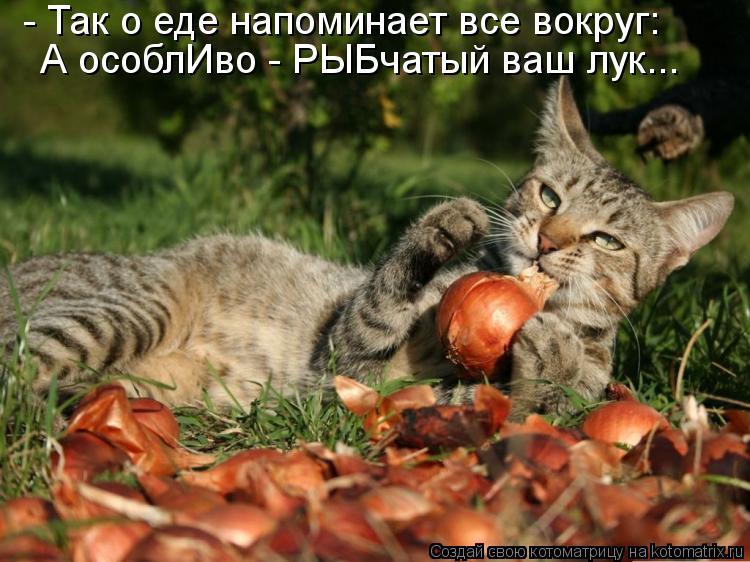 Котоматрица: - Так о еде напоминает все вокруг: А особлИво - РЫБчатый ваш лук...
