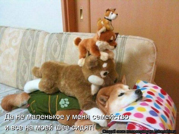 Котоматрица: Да не маленькое у меня семейство и все на моей шее сидят!