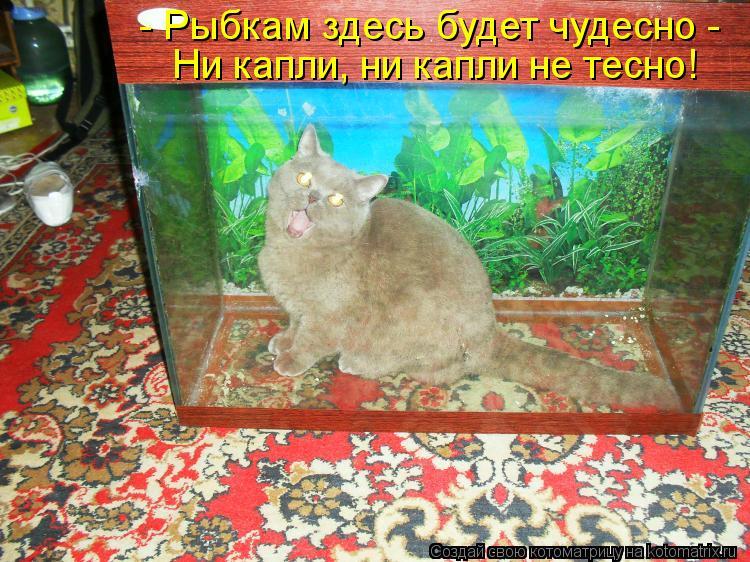 Котоматрица: - Рыбкам здесь будет чудесно -  Ни капли, ни капли не тесно!
