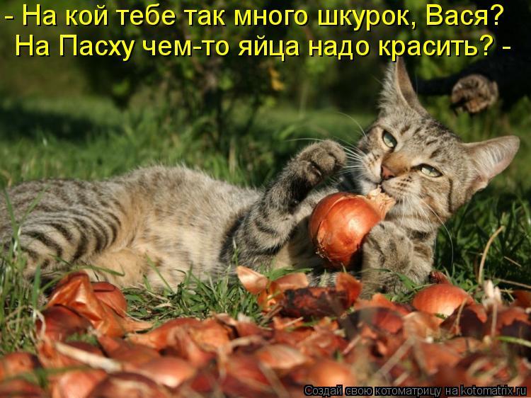 Котоматрица: - На кой тебе так много шкурок, Вася? На Пасху чем-то яйца надо красить? -