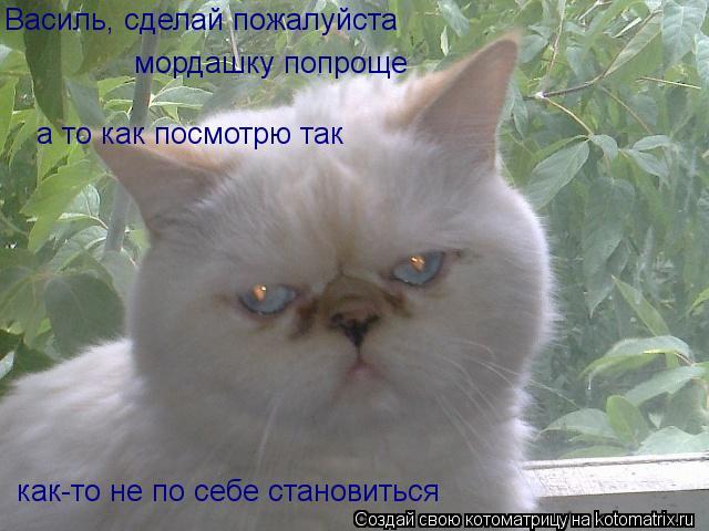 Котоматрица: Василь, сделай пожалуйста мордашку попроще а то как посмотрю так как-то не по себе становиться