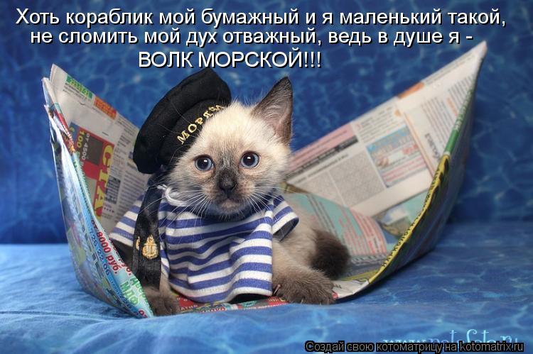 Котоматрица: Хоть кораблик мой бумажный и я маленький такой, ВОЛК МОРСКОЙ!!! не сломить мой дух отважный, ведь в душе я -