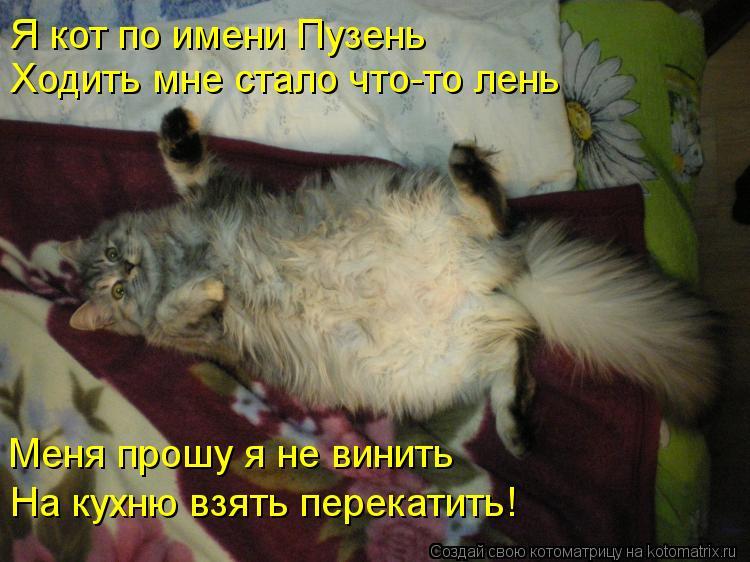 Котоматрица: Я кот по имени Пузень Ходить мне стало что-то лень Меня прошу я не винить На кухню взять перекатить!