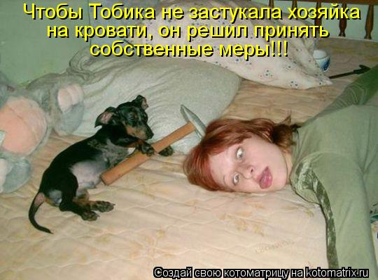 Котоматрица: Чтобы Тобика не застукала хозяйка  на кровати, он решил принять  собственные меры!!!