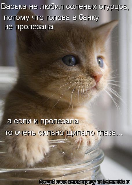 Котоматрица: Васька не любил соленых огурцов, потому что голова в банку не пролезала, а если и пролезала, то очень сильно щипало глаза...