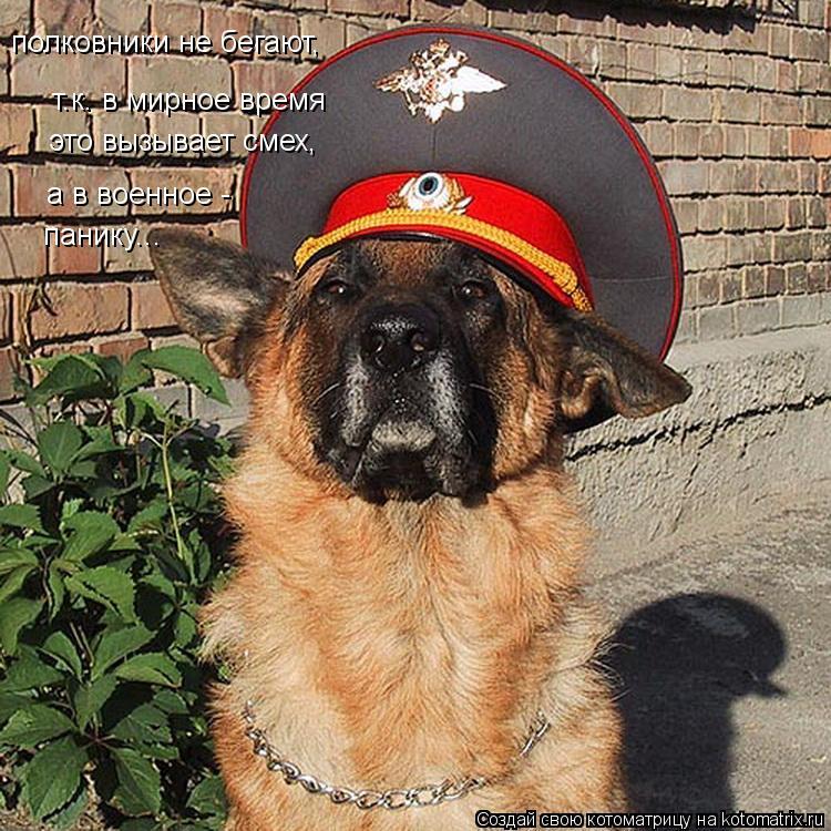 Котоматрица: полковники не бегают, т.к. в мирное время это вызывает смех, а в военное - панику...