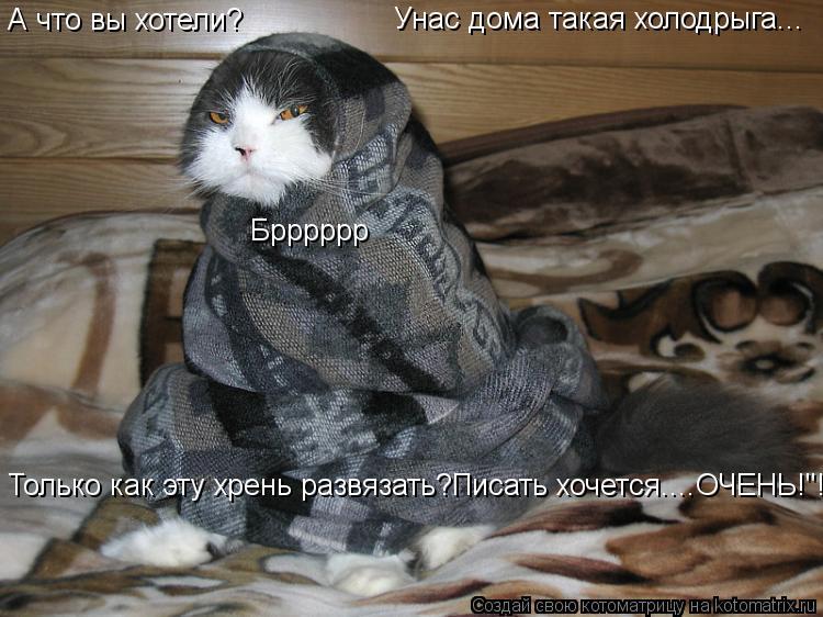 """Котоматрица: А что вы хотели? Унас дома такая холодрыга... Брррррр Только как эту хрень развязать?Писать хочется....ОЧЕНЬ!""""!"""