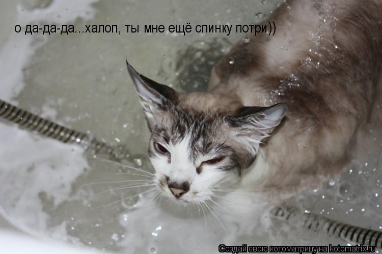 Котоматрица: о да-да-да...халоп, ты мне ещё спинку потри))