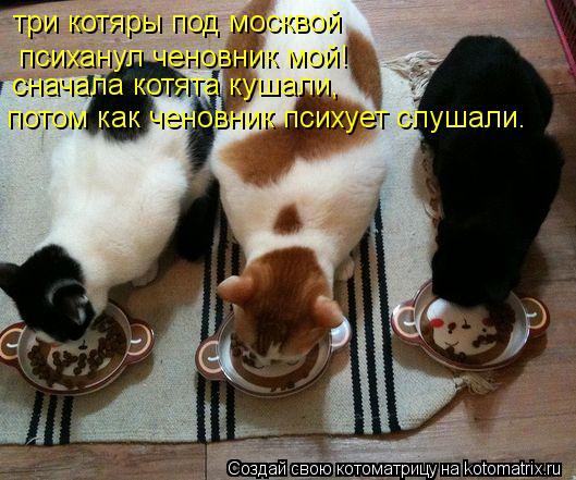 Котоматрица: три котяры под москвой психанул ченовник мой! сначала котята кушали, потом как ченовник психует слушали.