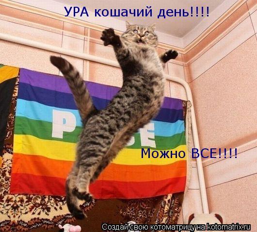 Котоматрица: УРА кошачий день!!!! Можно ВСЕ!!!!