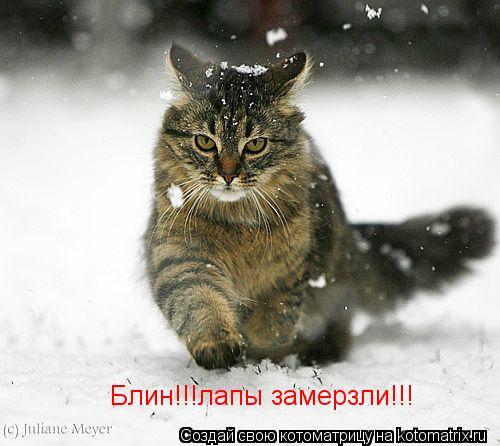 Котоматрица: Блин!!!лапы замерзли!!!