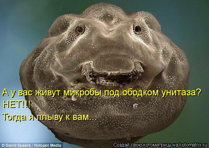 Котоматрица: А у вас живут микробы под ободком унитаза? НЕТ!!! Тогда я плыву к вам...
