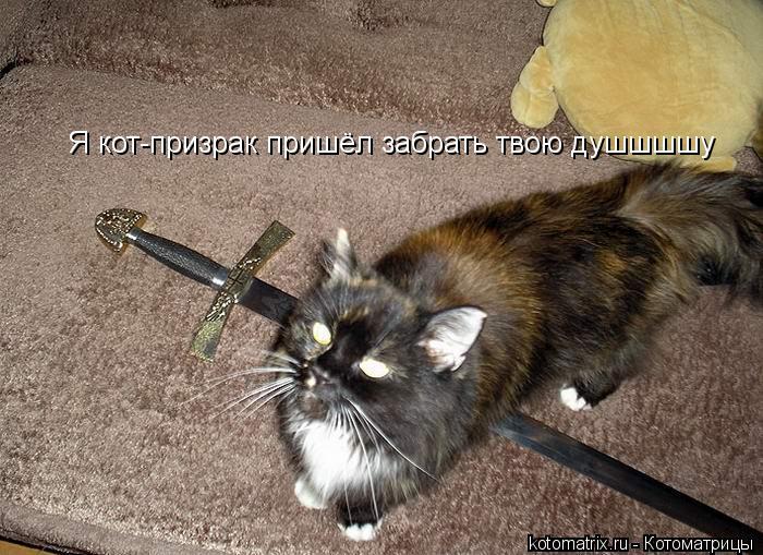 Котоматрица: Я кот-призрак пришёл забрать твою душшшшу