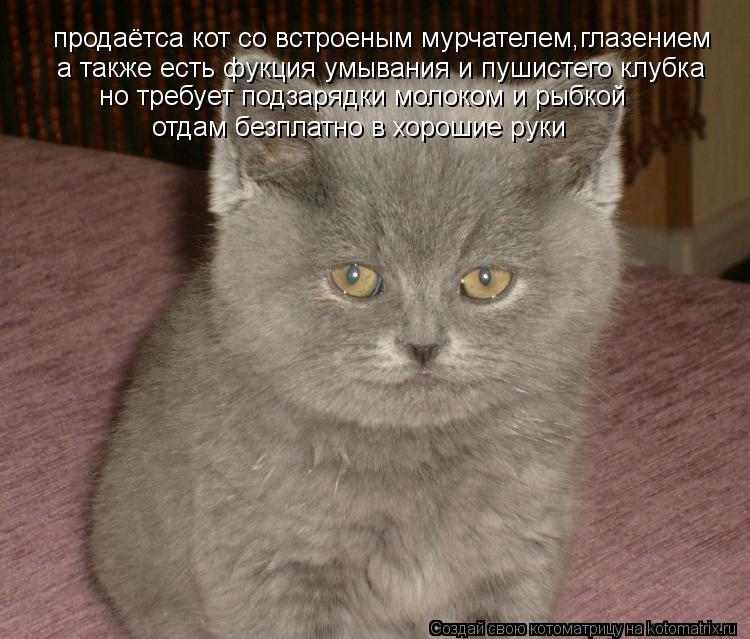 Котоматрица: продаётса кот со встроеным мурчателем,глазением а также есть фукция умывания и пушистего клубка но требует подзарядки молоком и рыбкой  от