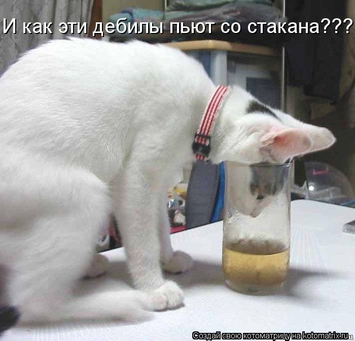 Котоматрица: И как эти дебилы пьют со стакана???