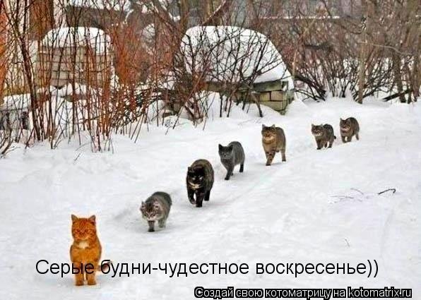 Котоматрица: Серые будни-чудестное воскресенье))
