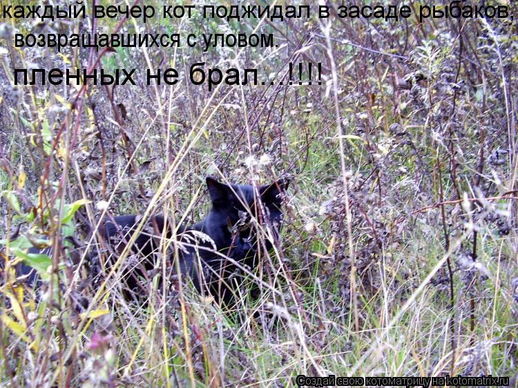 Котоматрица: каждый вечер кот поджидал в засаде рыбаков, пленных не брал...!!!! возвращавшихся с уловом.