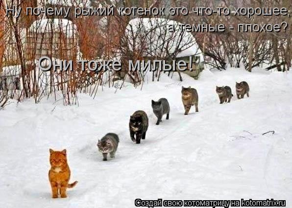 Котоматрица: Ну почему рыжий котенок это что-то хорошее, а темные - плохое? Они тоже милые!