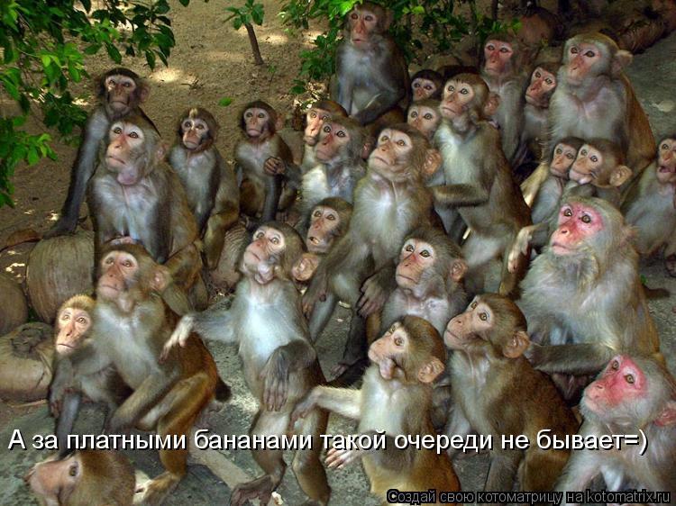 Котоматрица: А за платными бананами такой очереди не бывает=)