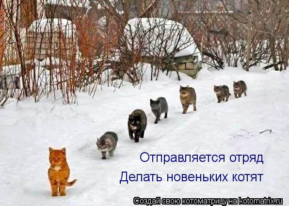Котоматрица: Отправляется отряд Делать новеньких котят