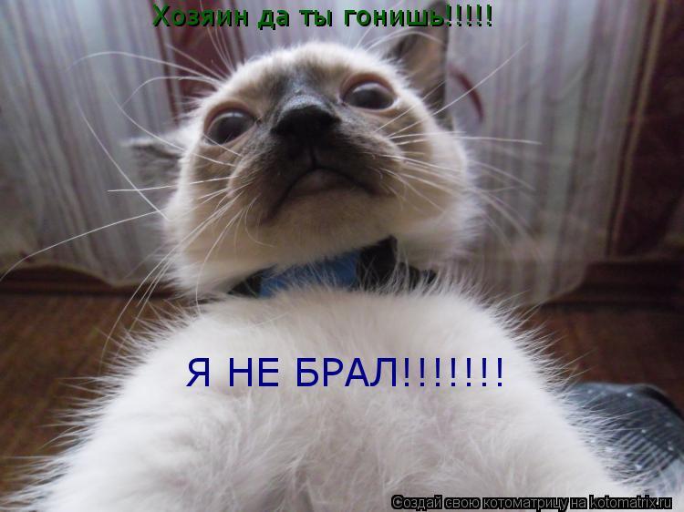 Котоматрица: Хозяин да ты гонишь!!!!! Я НЕ БРАЛ!!!!!!!