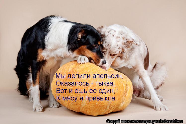 Котоматрица: Мы делили апельсин, Оказалось - тыква, Вот и ешь ее один, К мясу я привыкла.