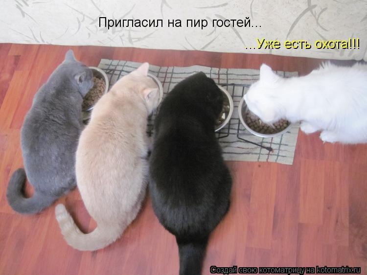 Котоматрица: Пригласил на пир гостей... ...Уже есть охота!!!